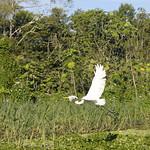 Viajefilos en la Amazonia, Peru 145
