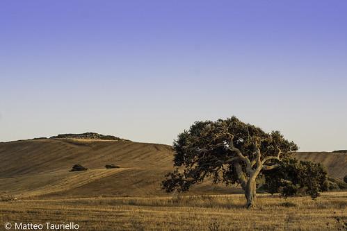 cork oak corkoak trekking tramonto sunset sundown tree country countryside sardinia