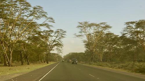 cars riftvalley road roadtrip trees