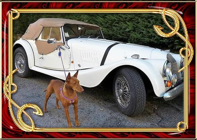 Fiuggi (Fr) - Cirneco dell' Etna, un cane aristocratico