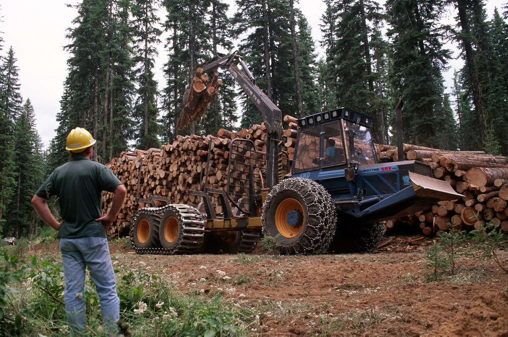 Umatilla National Forest, salvage thinning Badger TS.jpg
