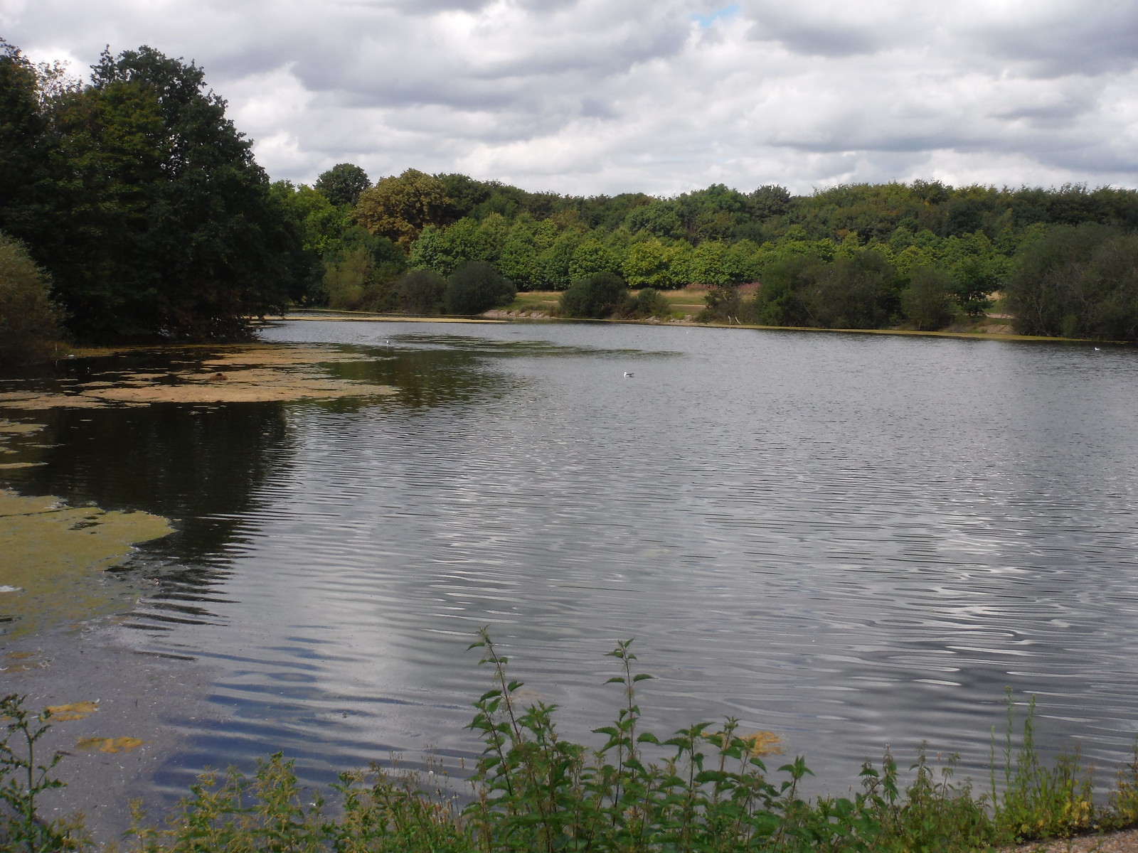 Heronry Pond SWC Walk Short 11 - Wanstead Park