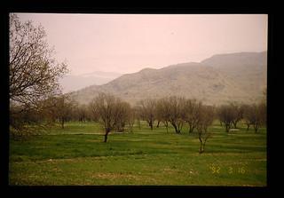 Pasture With Pistachio Tree = ピスタチオが生える草地