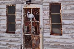 Rusty Door Art, and Window