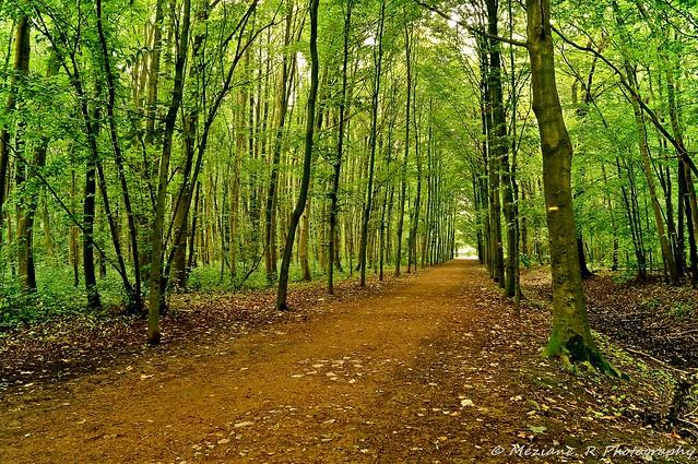 La Madeleine ( Nord France )