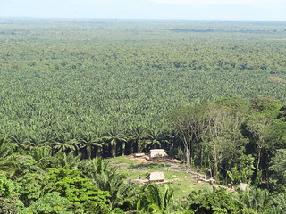 Palm Oil, Peru | by climatealliance