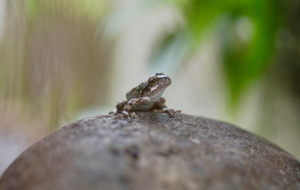 I Found A Frog In My Backyard - Backyard Design