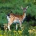 Dear Deer 鹿 by David Spreekmeester