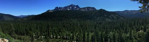 california spruce pine fir oak alder aspen bear eagle deer raccoon bare nakedbeauty