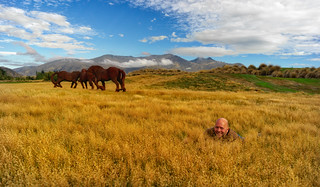 Derek Sivers In A Field Of Fake Horses | by Trey Ratcliff