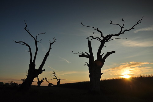 sunrise essex mundon smileonsaturday trees picture treesinthepicture sundaylights