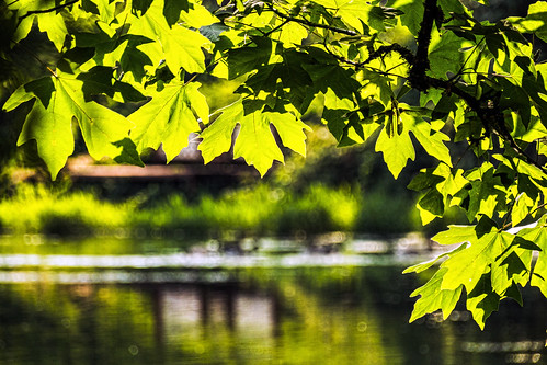 trees summer lake plant reflection green nature water leaves creek canon landscape hiking pacificnorthwest pnw sl1 camas swwashington lacamaspark sigma18250mmf3563dcmacrooshsm