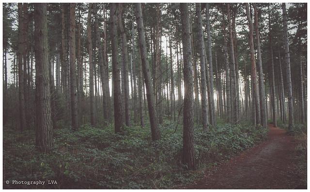 CentreParcs Sherwood Forest