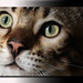 Cats Eyes,... by A.J.Pendleton-Lightbox 2008 (On and Off)