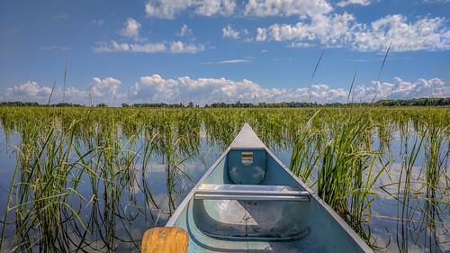 Wild Rice Cornucopia | by Brett Whaley