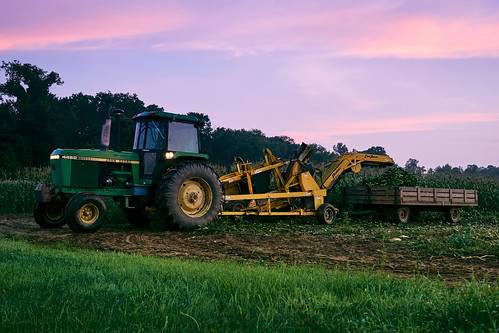 ct connecticut corn farmington newengland sony a6300 farm farming harvest morning sky sunrise tractor unitedstates us