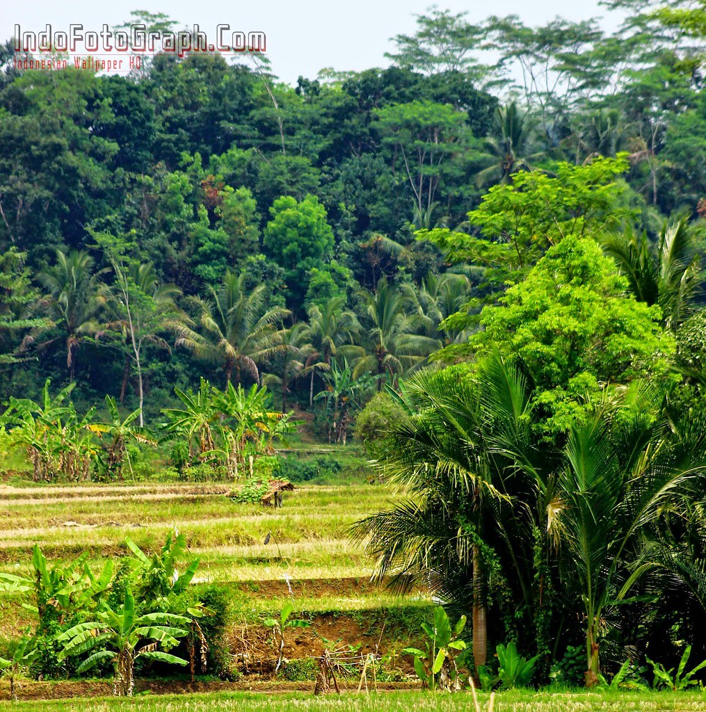 76+ Gambar Alam Pedesaan Yang Indah Paling Keren