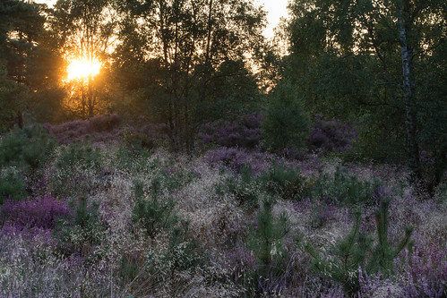 sunset witleycommon surrey landscape sun view heath heathland heather grasses