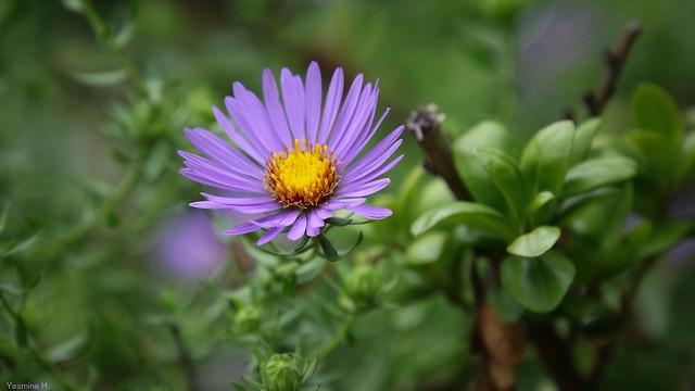 Flora - 3661