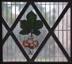 horse chestnut leaf, conker, A