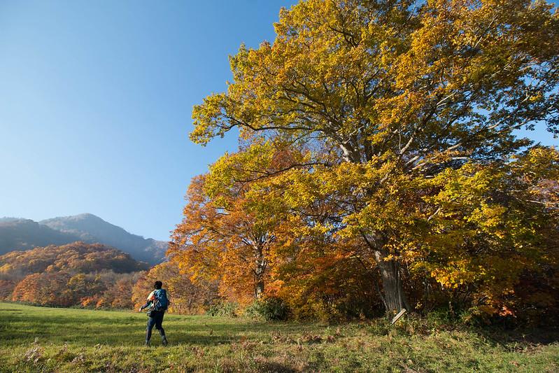 秋の戸隠高原牧場