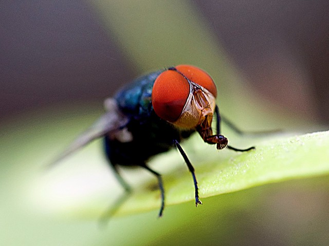 A humble fly