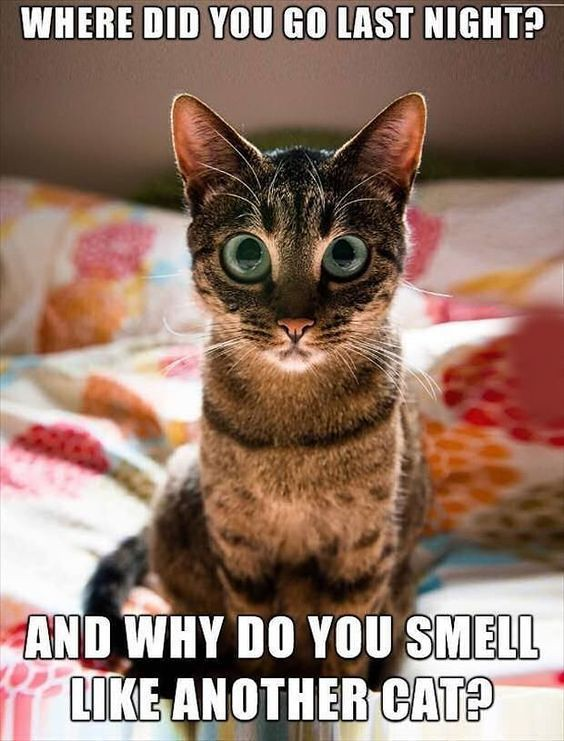 Most Funny Quotes :30 Hilarious Cat Memes | Most Funny Quote ...