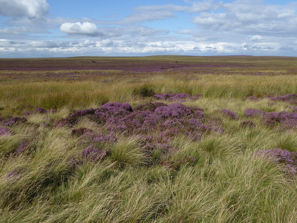 Moorland Sheffield to Bamford walk
