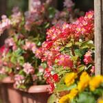 Blooming summer