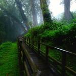 Forest 阿里山森林