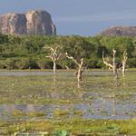 Elephant Rock monolith over swamp. Yala National Park, Sri Lanka