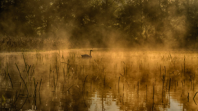 Morgennebel am Schwanensee - Morning Mist at the swan lake