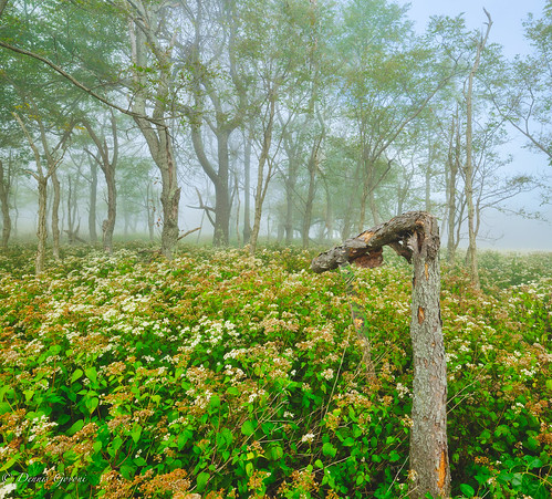 bigmeadows virginia clouds flowers fog landscape sky summer sunrise