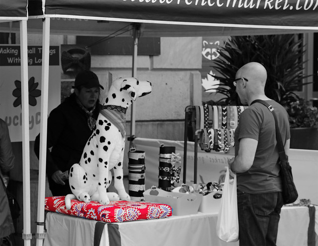 Buying a Dalmatian