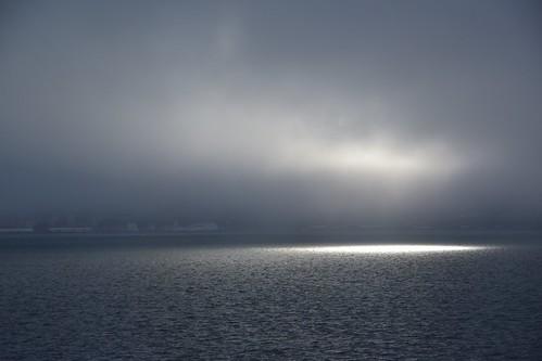 Foggy Wellington