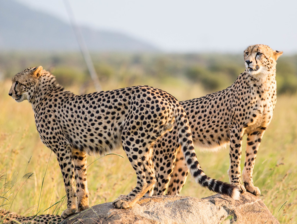 Two directions, Pilanesberg Nationalpark, South Africa