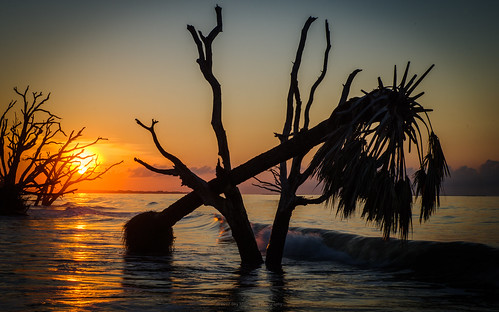 edistoisland hurricaneirma hurricanematthew boneyard trees dancing sunrise beach charleston southcarolina palmetto oak waves atlantic ocean pentaxk1 pentax2470mm