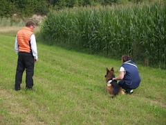 Sanitäts-Hunde Kurs