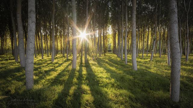 Últimos rayos del sol de verano