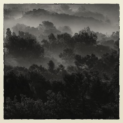 humberriver fog landscape mist morning sunrise trees bw monochrome silhouette toronto
