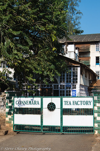 kerala southindia vandiperiyar roadviews teaplantation