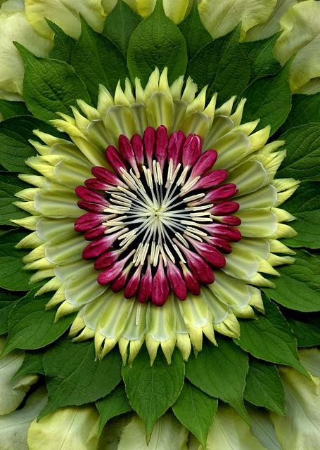 58418.02 Iris germanica, Weigela florida