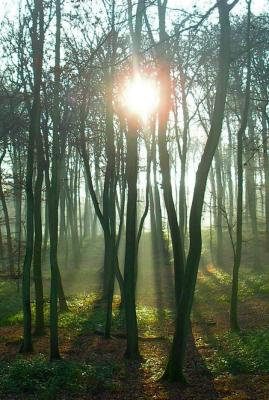 Sun Through Misty Trees