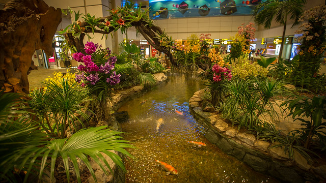 Singapore Changi Airport T2 - Orchid Garden 006