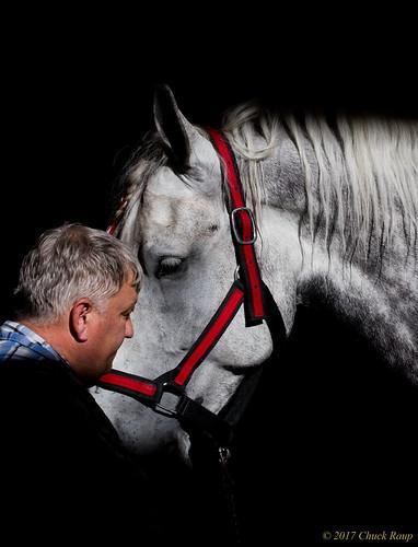 percheron drafthorse horse eveninglight person man weary tired naturallight northwest nikon d500 nikond500