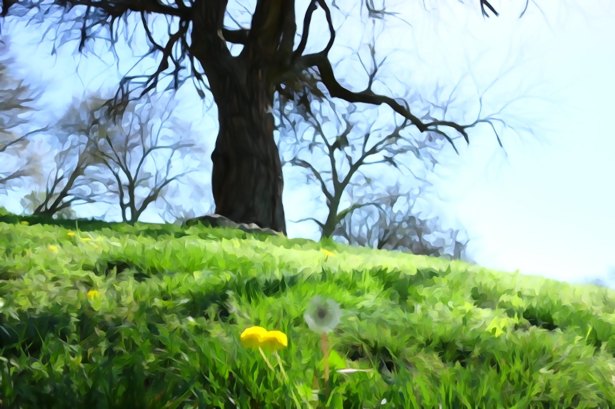 Chisholm tree