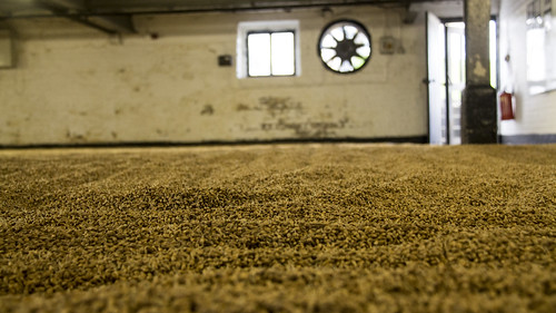 Barley grain spread out over the malting floor to dry | by travelmag.com