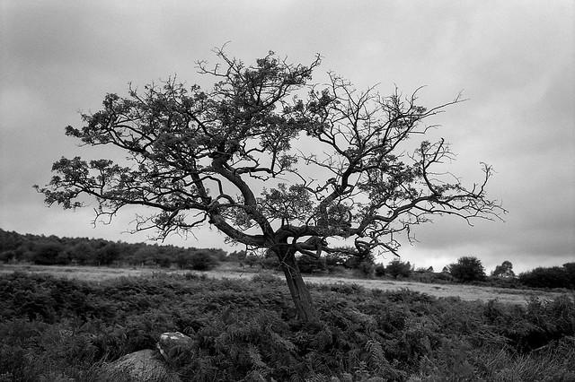 FILM - Trees at Longshaw-2