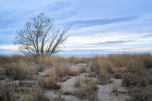 sky clouds grass tree lake lakeerie ohio mentor sand water evening field dune beach shore