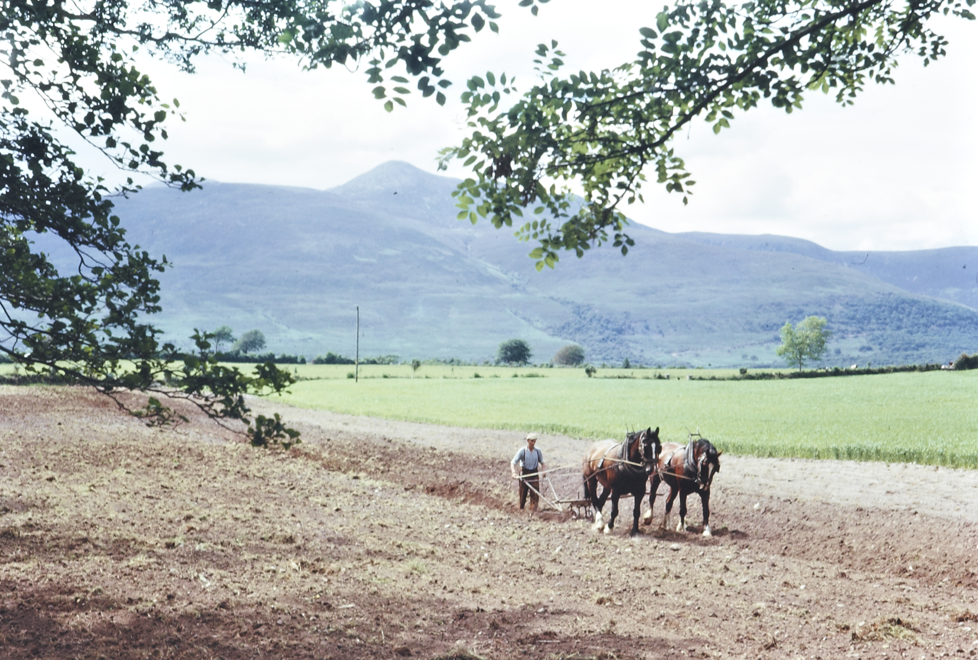 Horse drawn plough, Ring of Kerry